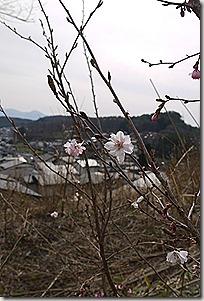 2013_0423_143527-P1230361